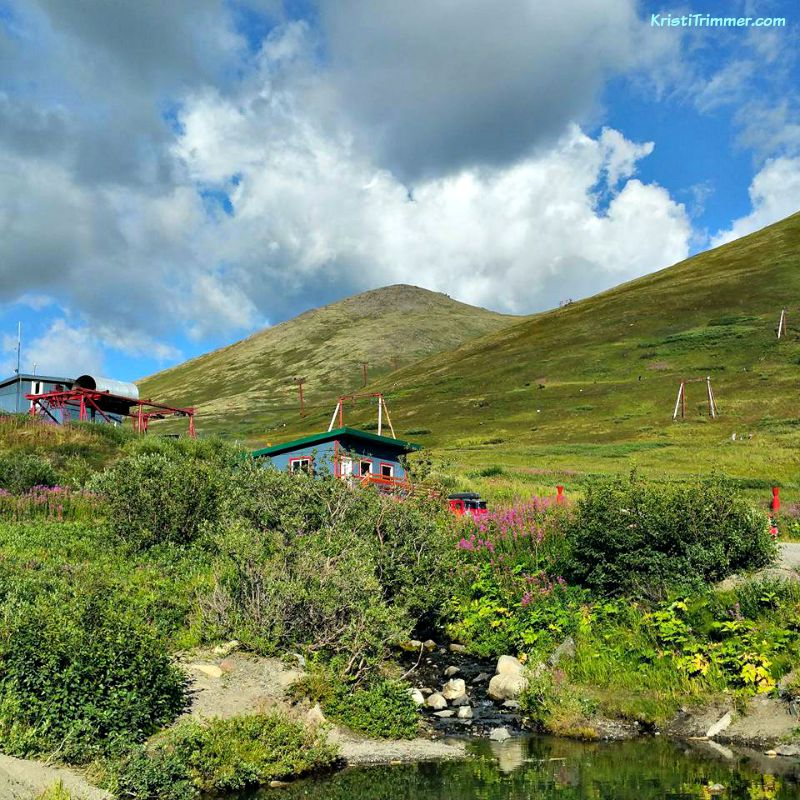 8-5-15 Arctic Valley Blueberry Picking