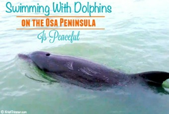Swimming WIth Dolphins on Osa Peninsula is Peaceful