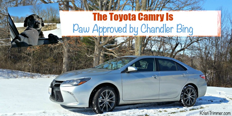 The Toyota Camry Is Paw Approved by Chandler Bing FB