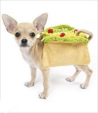 My Taco Obsession Has Just Reached An All New Level ...
