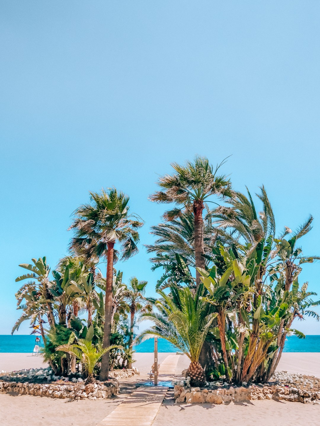 Bunch of tropical palm trees growing on beach in windy day