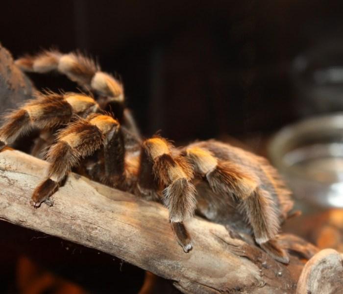 The Not So Itsy Bitsy Spider