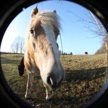 Pferd_Fisheye3