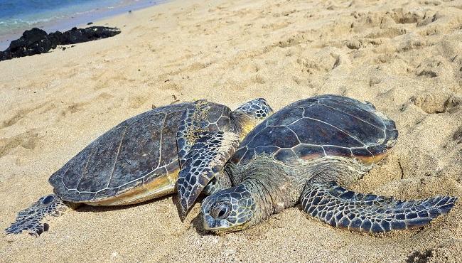 sea turtles_199228
