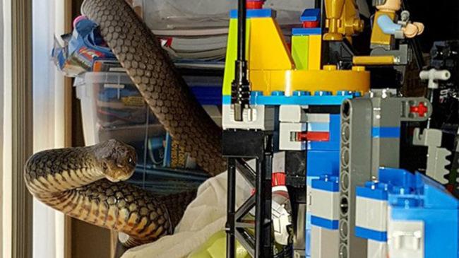 snake in legos_616784