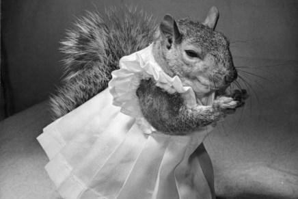 Over hoe je een transseksuele eekhoorn fotografeert