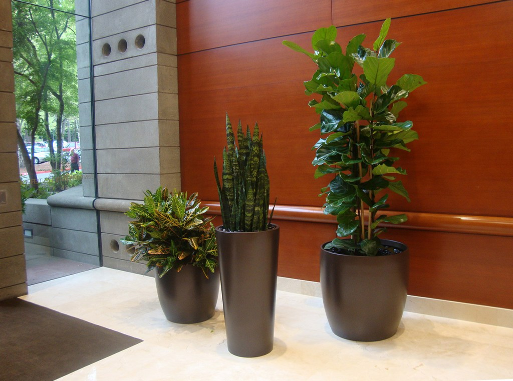 Potted tropical plants in the entrace to a bank