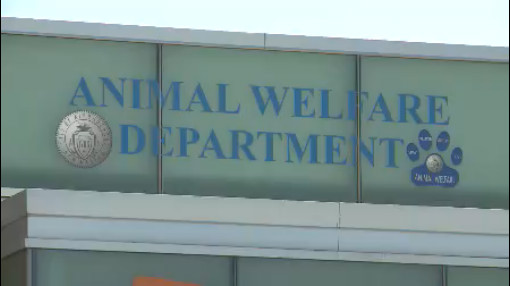 Animal Welfare Department_118589