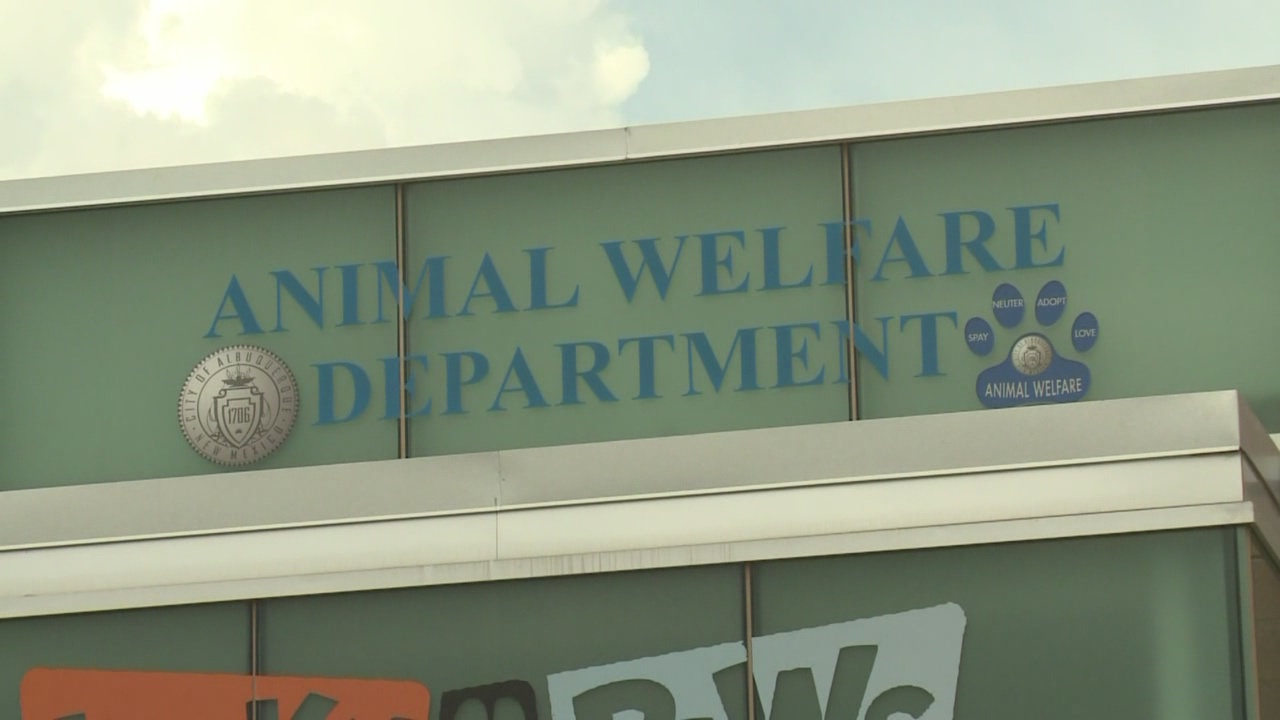 animal welfare pic_561582