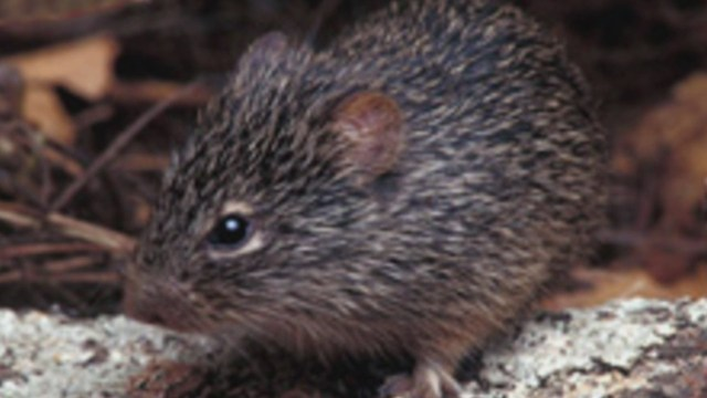 Health officials warn hantavirus cases spike in the spring