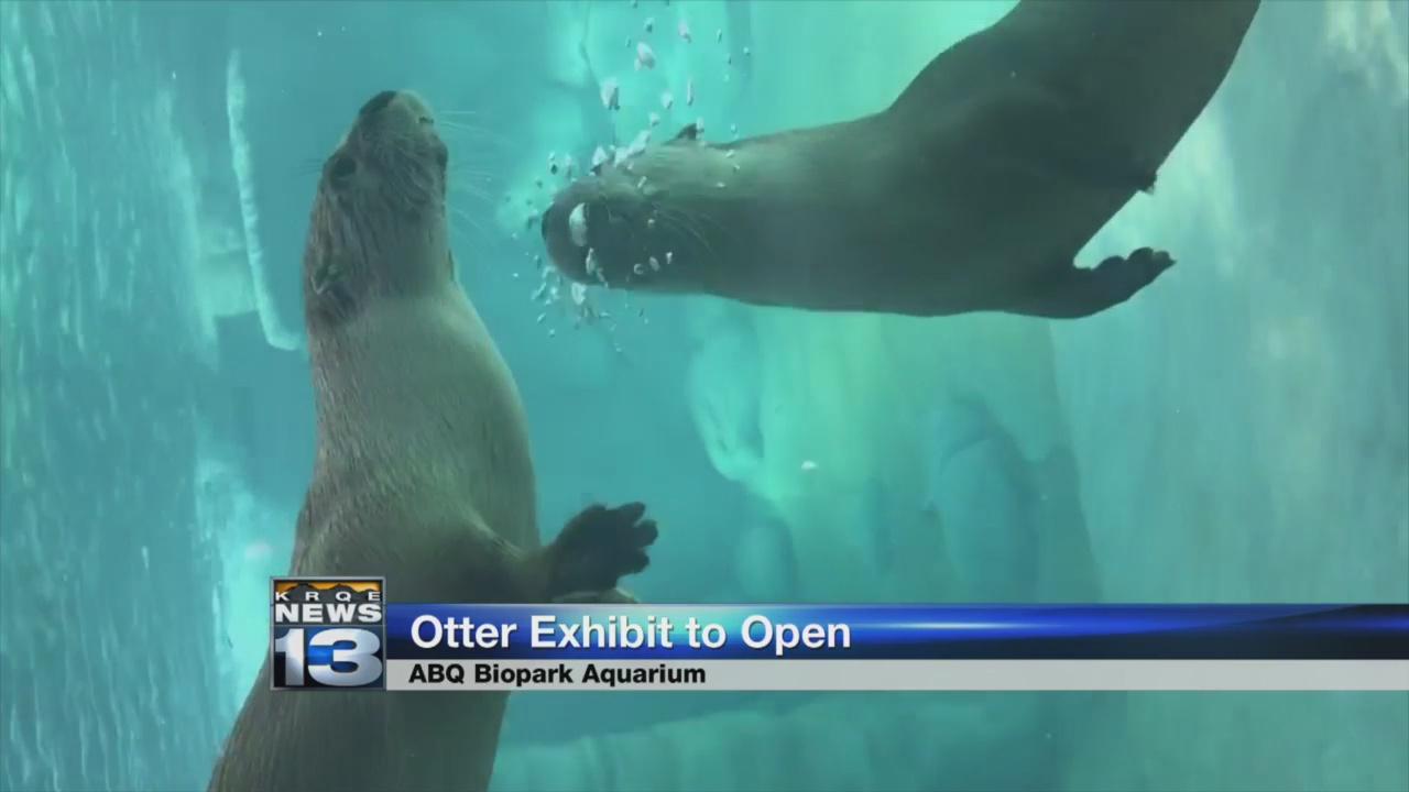 River otter exhibit opening Tuesday at ABQ Biopark_1530584725996.jpg.jpg