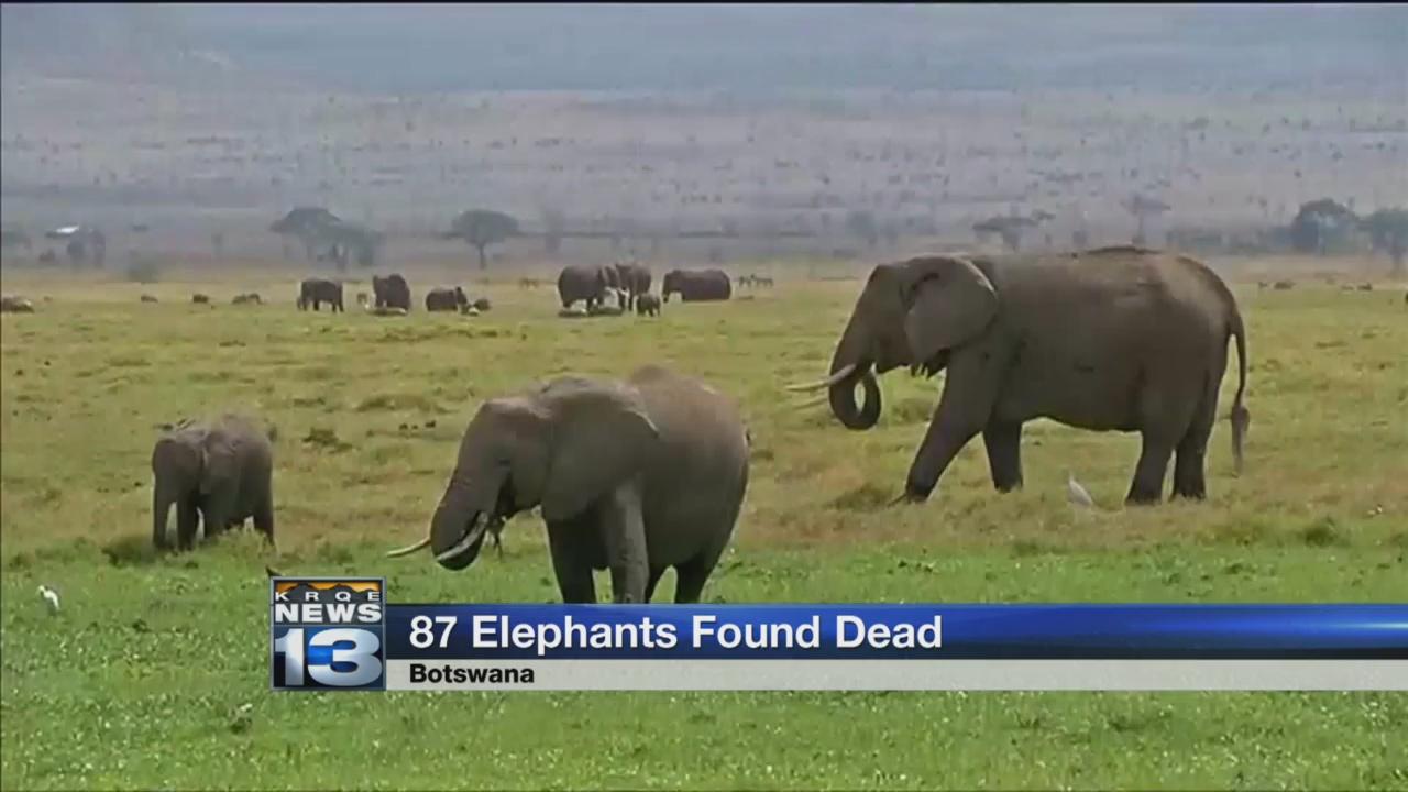 87 elephants found dead_1536101378138.jpg.jpg