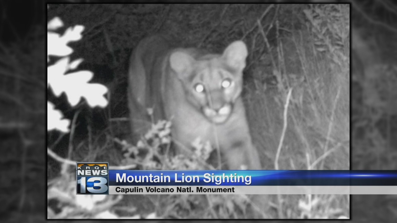 mountain lion sighting_1536796148643.jpg.jpg