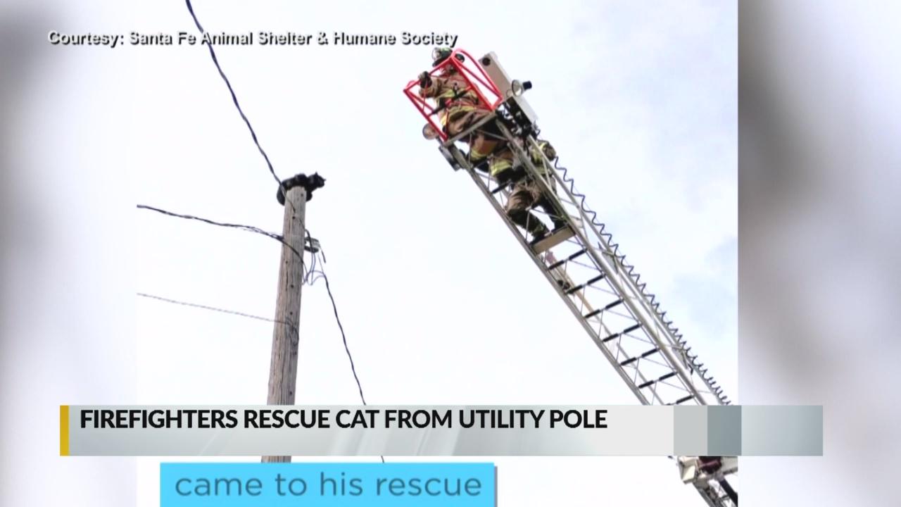 Cat stuck on utility pole rescued by Santa Fe firefighters_1549689749980.jpg.jpg