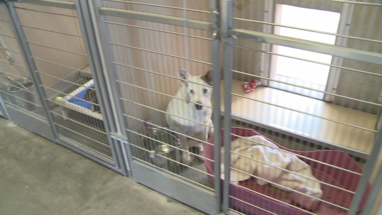 animal shelter_1550258130421.jpg.jpg