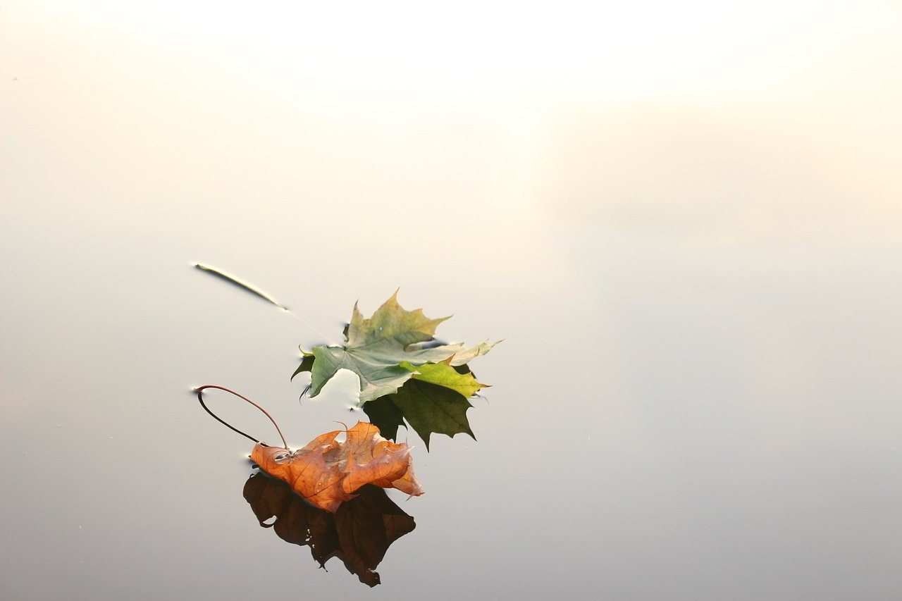 Stumble, Fall And Learn