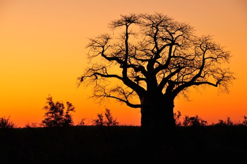 Silhouettes of the Kruger National Park - shooting into the sun!