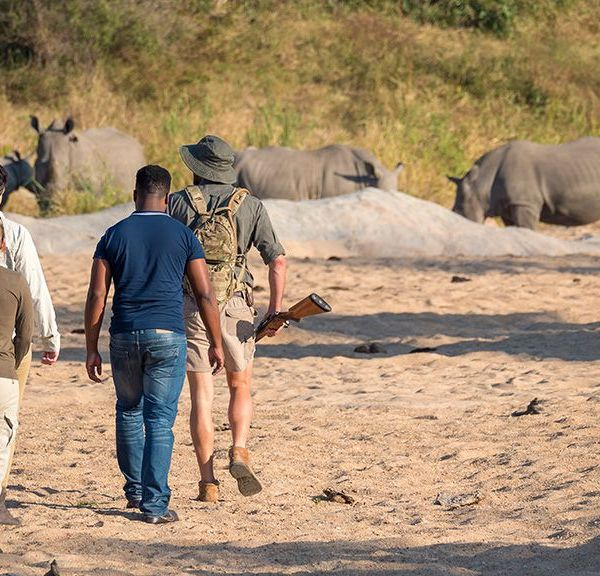 Jock Safari Lodge Walking Safari