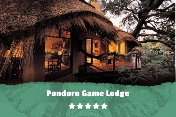 Kruger featured image Pondoro Game Lodge