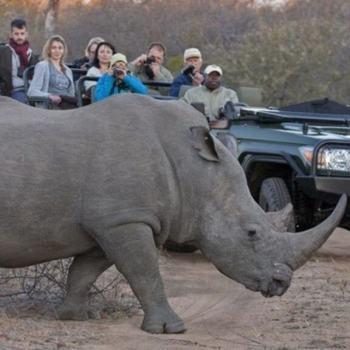 Umlani Bushcamp Rhino