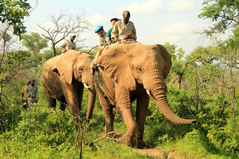 Manyatta Rock Camp Elephants Safari