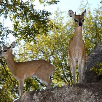Manyatta Rock Camp Wildlife