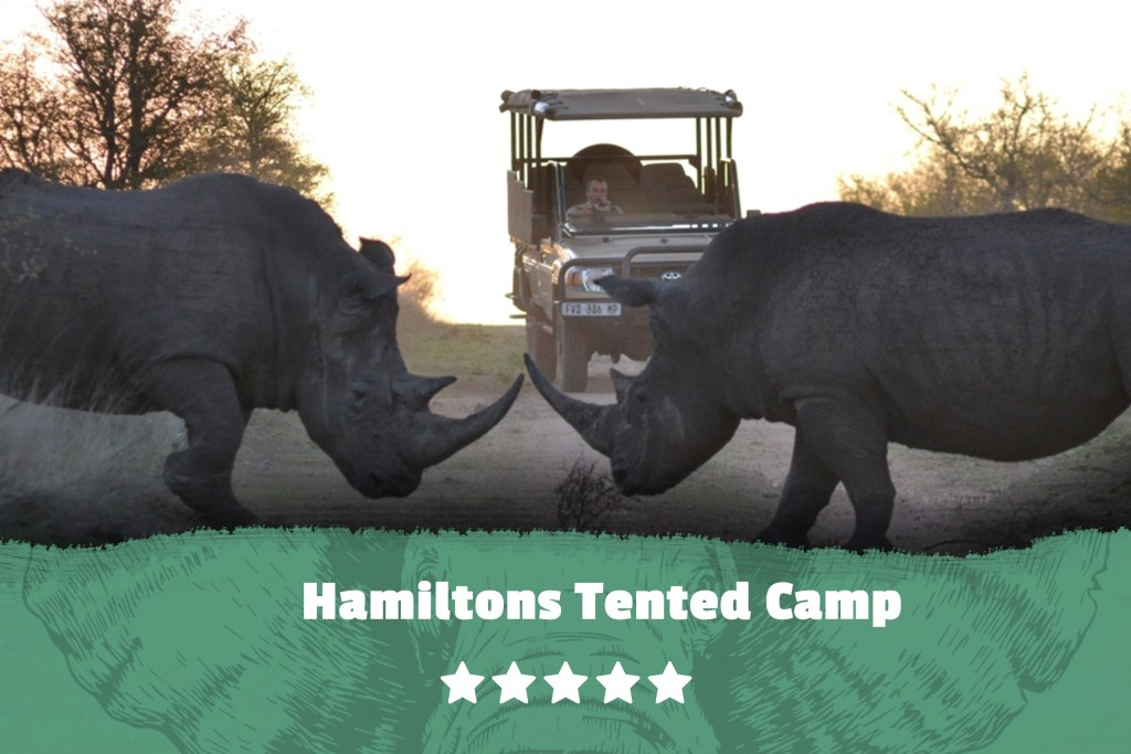 Kruger featured image Hamiltons Tented Camp Rhino Site