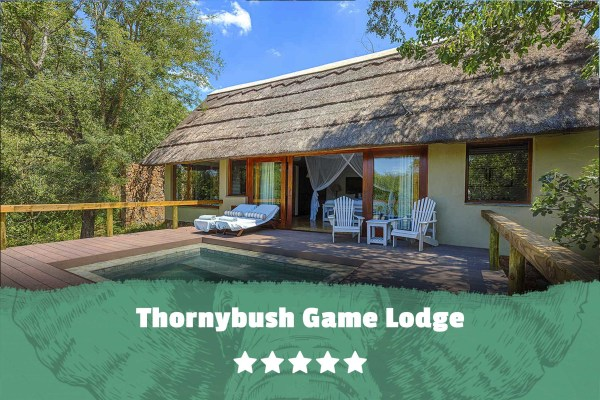 Kruger featured image Thornybush Game Lodge