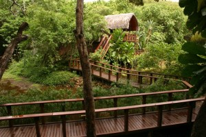 Serenity Forest Eco Reserve Walkway