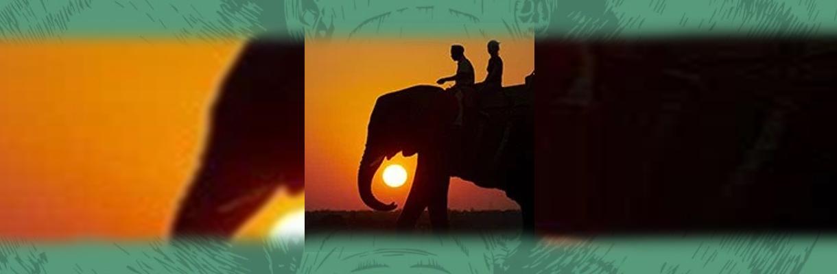 Shumbalala Game Lodge Elephant Riding