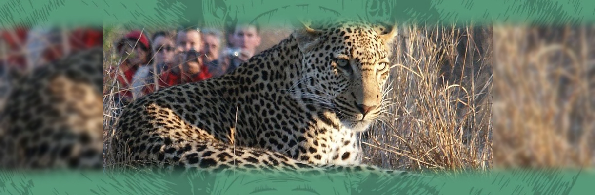Shumbalala Game Lodge Leopard Close Up