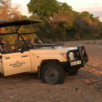 Hamiltons Tented Camp Safari Game Drive Stop
