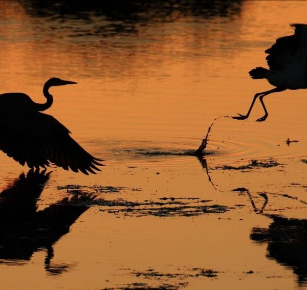 Motswari Private Game Reserve Evening View of Birds Taking Flight