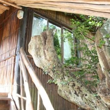 Ezulwini Game Lodge Tree House