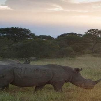 Hoyo-Hoyo Safari Lodge Rhino