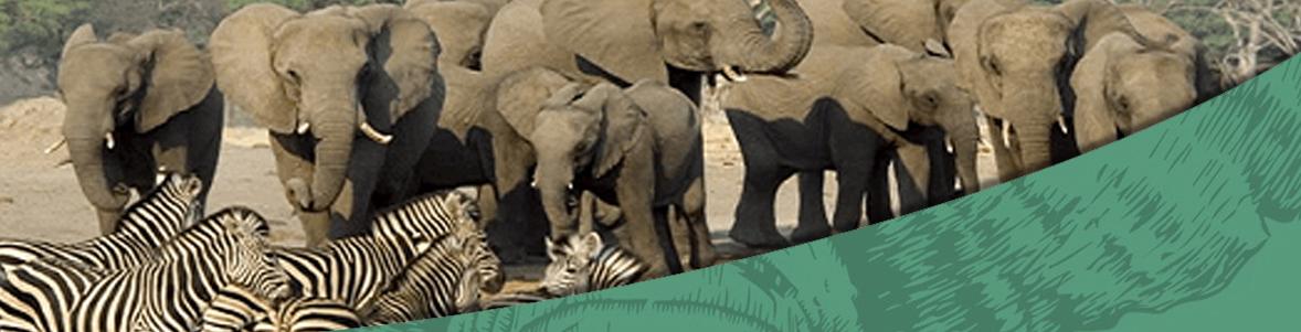 14 Days Honeyguide, Shamwari and Cape Town Kruger