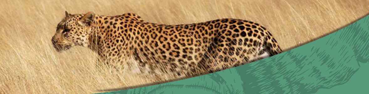 Sabi Sands Private Banner