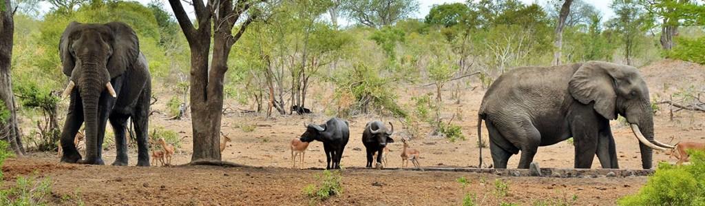 Balule Nature Reserve Safaris