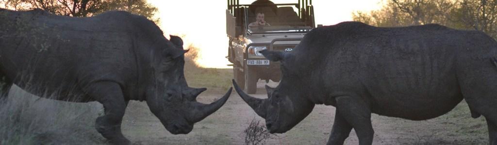 Kwa Madwala Private Game Reserve Wildlife & Activities
