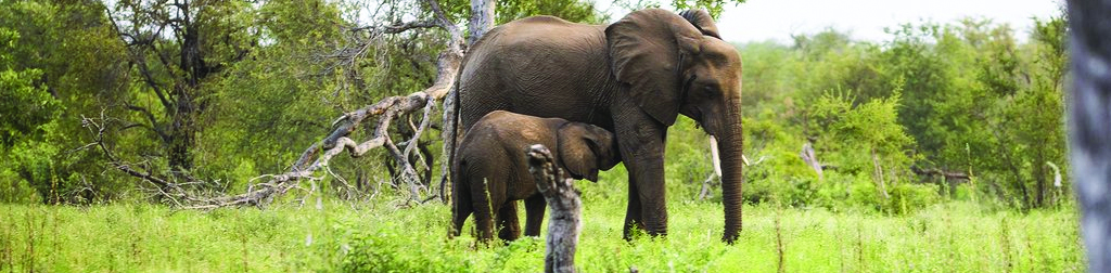 Amani Safari Camp Game Viewing