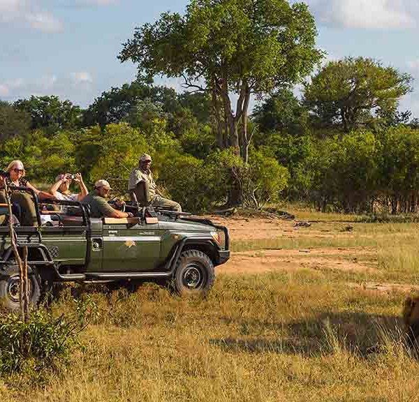 Jackalberry Lodge Safari Game Drives