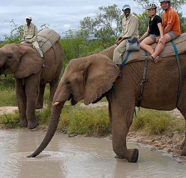 Manyatta Rock Lodge Elephant Drinking Water