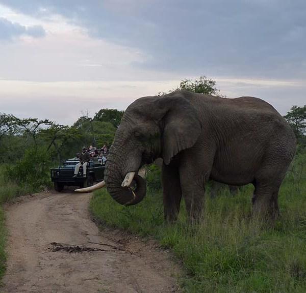 Serondella Game Lodge Wildlife Elephant