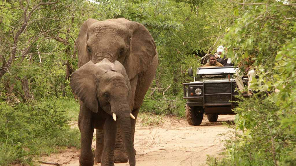 Shumbalala Game Lodge Game Drives Elephants