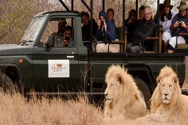 Elandela Private Game Reserve Game Drive Safari