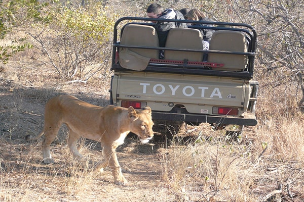 Ezulwini Resorts Lioness