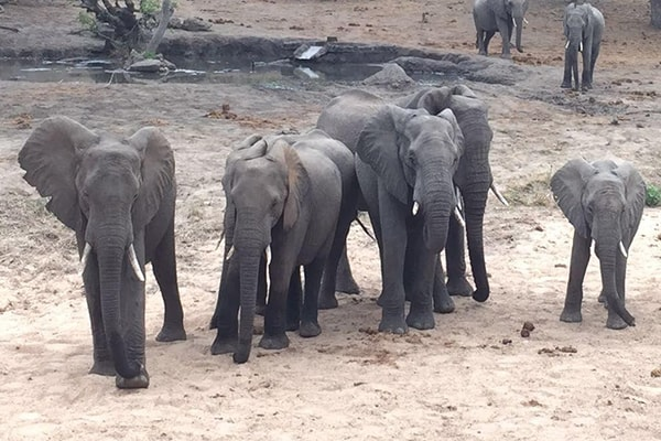 Klaserie Camps Elephants