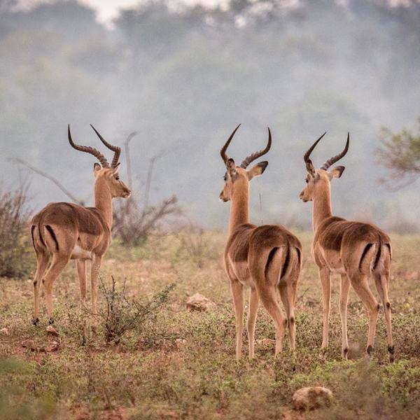 Little Garonga Animal Wildlife