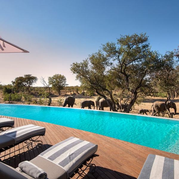 Ngala Safari Lodge Elephants