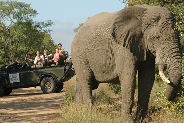 Nkelenga Tented Camp Elephant